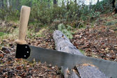 Sawing of firewood — Stock Photo