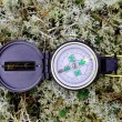 Compass is based on reindeer moss - Stock Photo