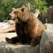 Stock Photo: Funny brown bear