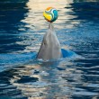 Stock Photo: dolphin