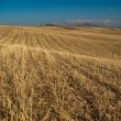 Barley meadows — Stock Photo