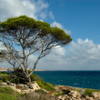 Tree over the sea - Stock Photo