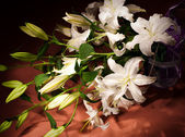 Bouquet of white lilies — Stock Photo