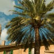 Palm tree in a middle-age city — Stock Photo