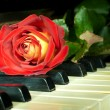 Beautiful rose on the keys of old piano — Stockfoto