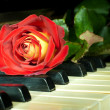 Beautiful rose on the keys of old piano — Stok fotoğraf