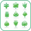 Set of leaves. Vector — Stock Vector