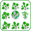 Royalty-Free Stock Vector Image: Vector - Green plants