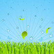 Green grass and rain — Stock Vector