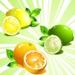 Royalty-Free Stock Vector Image: Set citrus fruit. Vector