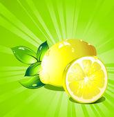 Lemon citrus fruit. Vector. — Stock Vector