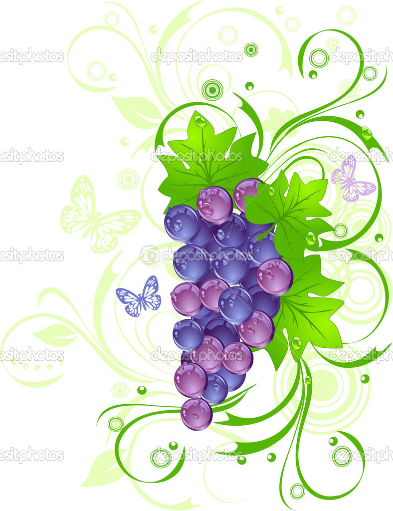 Grapevine with drops of water against green leaves, vector illustration — Stock Vector #1379142