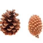 Pine — Stock Photo #1268982