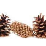 Pine — Stock Photo #1268991