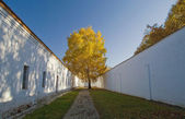 Lonely birch in the prison yard. — Stock Photo