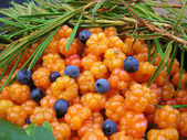 South Karelia, beginning of August, cloudberry with some blueberries. — Stock Photo