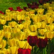 Stock Photo: World of tulips