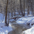 Stream in the winter forest — Stock Photo