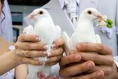 White wedding doves — Stock Photo