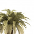 Palm over white — Stock Photo