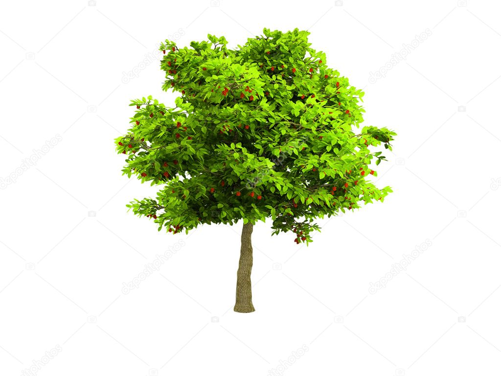 Isolated green tree against white — Stock Photo #1153541