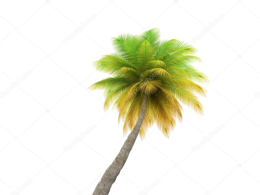 Green palm on a white background — Stock Photo #1154719