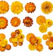 Set of different flower blossoms. — Stock Photo