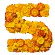 Number from yellow and orange flowers — Stock Photo #1596353