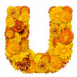 Stock Photo: Letters from alphabet from flowers