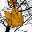 Stock Photo: Lonely leaves