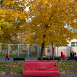 Red bench in autumn park — Stock Photo