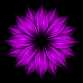 Abstract purple flower on black — Stock Photo