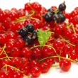 Currant on a white plate - Stock Photo