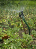 Irrigation sprinkler watering garden — Stock Photo