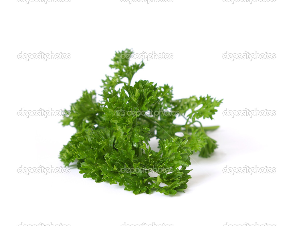 Fresh leaf of parsley isolated on white background  Stock Photo #1112043