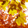 Autumn leaves — Stock Photo #1126395