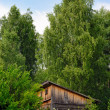 Stockfoto: Old shed on fringe of forest
