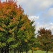 Stock Photo: Autumn tree in park