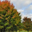 Autumn tree in park — Stock Photo #1139936
