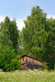 Old shed on the fringe of the forest — Stockfoto