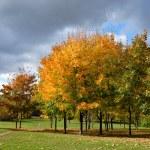 Autumn tree in park — Stock Photo