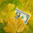 One dollar in autumn maple leaves - Stock Photo
