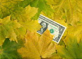 One dollar in autumn maple leaves — Stock Photo