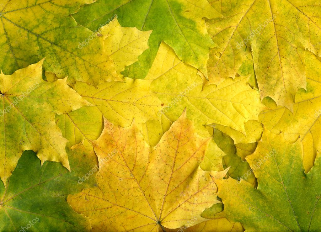 Autumn maple leaves background — Stock Photo #1144065