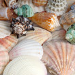Stock Photo: Seashells background
