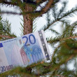 Stock Photo: Twenty euro banknote in tree branch