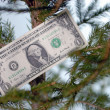 One dollar banknote in tree branch - Stock Photo
