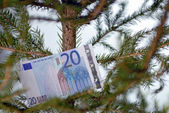 Twenty euro banknote in tree branch — Stock Photo