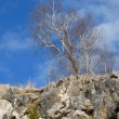 Lonely tree on stony slope - Stock Photo