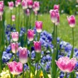 Stock Photo: Colorful flower bed